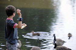 """© Licensed to London News Pictures. 14/07/2013. A boy throwing bread in to the water. An unusual sign telling visitors """"Don't Feed The Rats"""" in a pond at Chislehurst Common in South East London. You would normally associate a trip to the local pond with feeding the ducks but at Prickend Pond on Chislehurst Common a problem with rats, worsened by the feeding of bread to ducks and geese, has become so serious that the local trust has taken to putting up signs in an attempts to solve the problem. <br />  Photo credit :Grant Falvey/LNP"""