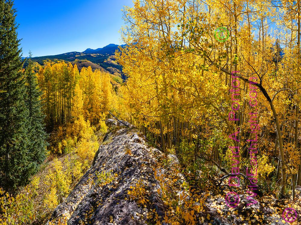 Autumn aspens along a rock ridge in the San Juan Mountains, Colorado, © David A. Ponton [Extra large file suitable for mural]