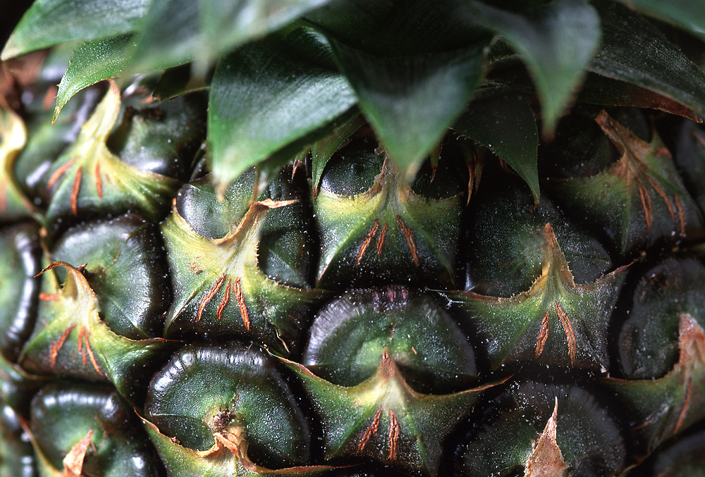Extreme close up of a Mexican pineapple's skin