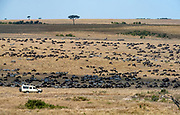 The great migration in Maasai Mara, Kenya.
