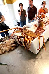 Il proprietario di questa pescheria di Brindisi, incuriosito e naturalmente divertito della mia presenza, mette in bella mostra sul suo bancone due grosse aragoste appena pescate.