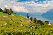 The Lavaux is a region in the canton of Vaud in Switzerland, in the district of Lavaux-Oron. The Lavaux consist of over 2000 acres of terraced wineyards that stretch for about 30 km along the south-facing northern shores of Lake Geneva.  The vine terraces can be traced back to the 11th century, when Benedictine and Cistercian monasteries controlled the area. It benefits from a temperate climate, but the southern aspect of the terraces with the reflection of the sun in the lake and the stone walls gives a mediterranean character to the region. The main wine grape variety grown here is the Chasselas.