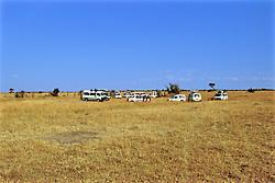 Safari Vans On Safari