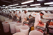 Pigs/Swine/Hog: Meat cutters on the disassembly line at the Oscar Mayer Company slaughterhouse in Perry, Iowa. USA.