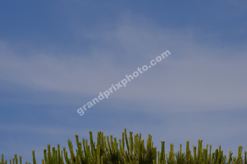 Tree and blue skies before the 2019 French Grand Prix at Paul Ricard. Photo: Grand Prix Photo