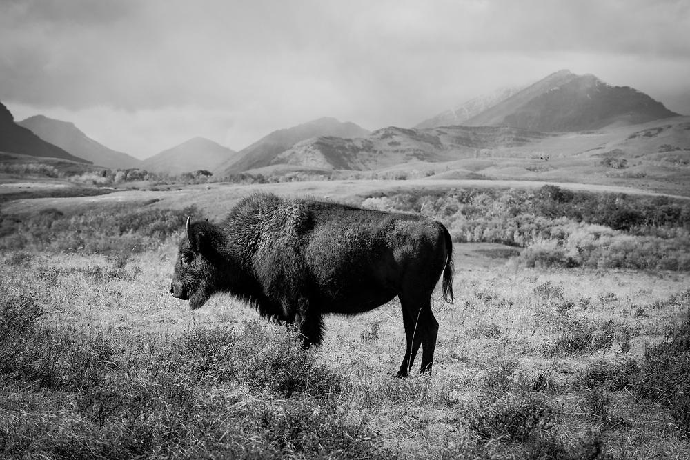 Blackfeet Country, Blackfeet Indian Reservation, Blackfeet, Montana
