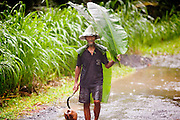 Apr. 22 - UBUD, BALI, INDONESIA:    A man uses a banana leaf as an umbrella during a rain storm in Ubud, Bali. Photo by Jack Kurtz/ZUMA Press.