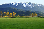 Mt. Hough and Cottonwood Trees Across Indian Valley near Taylorsville, Crescent Mills, Greenville, Plumas County, Northern Sierra Nevada Mountains, California Mountains, Fresh Grass, Willows.