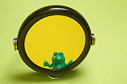 funny picture of a frog in a mirror