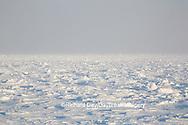 60595-01116 Hudson Bay ice pack at Cape Churchill Wapusk National Park, Churchill, MB