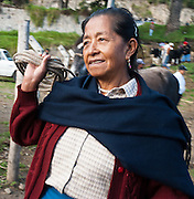 A happy seller leaves Otavalo animal market with an empty rope, Ecuador, South America. The culturally vibrant town of Otavalo attracts many tourists to a valley of the Imbabura Province of Ecuador, surrounded by the peaks of Imbabura 4,610m, Cotacachi 4,995m, and Mojanda volcanoes. The indigenous Otavaleños are famous for weaving textiles, usually made of wool, which are sold at the famous Saturday market and smaller markets during the rest of the week. The Plaza del Ponchos and many shops tantalize buyers with a wide array of handicrafts. Nearby villages and towns are also famous for particular crafts: Cotacachi, the center of Ecuador's leather industry, is known for its polished calf skins; and San Antonio specializes in wood carving of statues, picture frames and furniture. Otavaliña women traditionally wear distinctive white embroidered blouses, with flared lace sleeves, and black or dark over skirts, with cream or white under skirts. Long hair is tied back with a 3cm band of woven multi colored material, often matching the band which is wound several times around their waists. They usually have many strings of gold beads around their necks, and matching tightly wound long strings of coral beads around each wrist. Men wear white trousers, and dark blue ponchos. Otavalo is also known for its Inca-influenced traditional music (sometimes known as Andean New Age) and musicians who travel around the world.