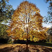 20161108 Fall Foliage