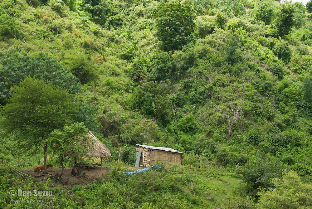 A man sits with his cattle next to a traditional bamboo hut and thatched roof shelter in the mountains southwest of Dili, Timor-Leste (East Timor)