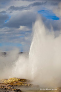 Clepsydra Geyser erupts in late afternoon light in the Lower Geyser Basin of Yellowstone National Park in winter