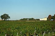 Vineyard. Chateau Sansonnet, Saint Emilion, Bordeaux, France