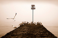 Sea Gulls in Dawlish, UK - Sepia