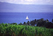 Salboat, Maui, Hawaii<br />