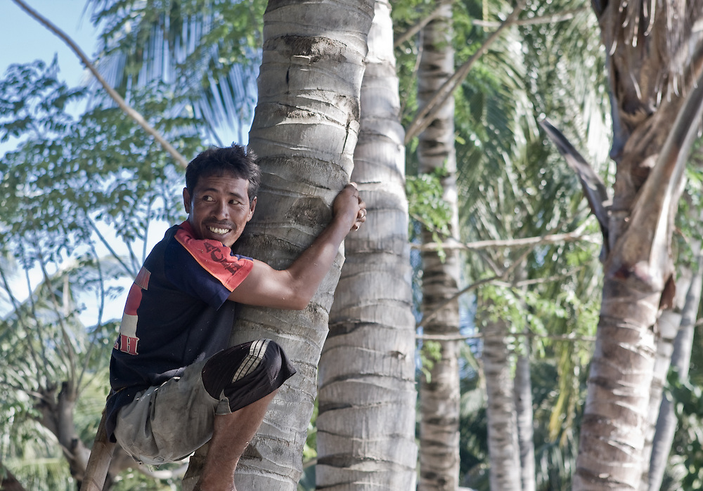 A local man climbs a coconut palm in Central Sulawesi