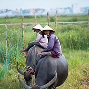 Two farmers sitting on buffalo outside of Hoi An
