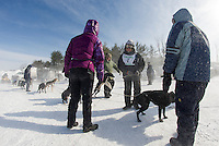 Hermel Bergeron and his crew from Charette, Quebec hook up their dog team for the final Open Class race at the 86th annual Laconia World Championship Sled Dog Races on Sunday.  (Karen Bobotas/for the Laconia Daily Sun)