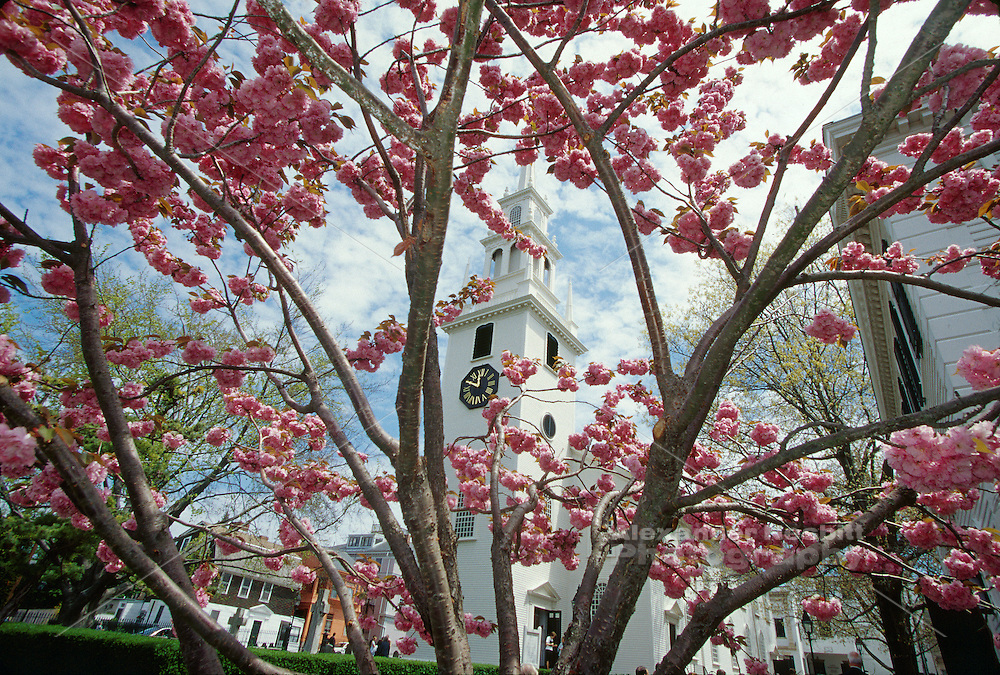 Usa,Newport, RI - Springtime view of Trinity Church through a cherry blossom tree.