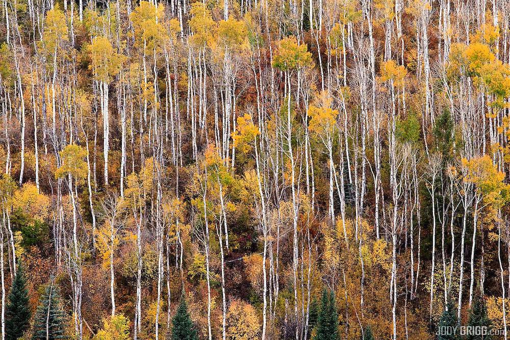 Autumn colors in the Colorado mountains