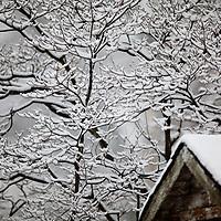 Winter From My Window