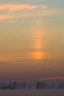 Solar sun Pillar at sunrise over trees and radiation fog in field, Merced National Wildlife Refuge, Central Valley, California