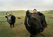A 14 years old girl after milking her yak in the morning. A yak can weight up to 1 ton. Husbandry is the main livelihood in Mongolia.