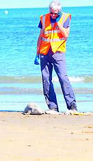 Seal Shanklin Beach