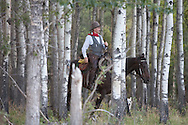 Photo Randy Vanderveen.Near Debolt, Alberta, July 22/08.A cowboy works the bush with his horse and dog looking for cattle that may be laying in the shelter away from the sun.
