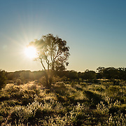 Sunset over outback trees