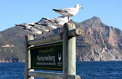 Karbonkelberg, Hout Bay, Cape Town