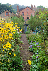 View towards the house with Helianthus 'Lemon Queen' in the foreground