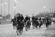 November 1-3, 2018: Breeders' Cup Horse Racing World Championships. The European contingent out on the gallops.