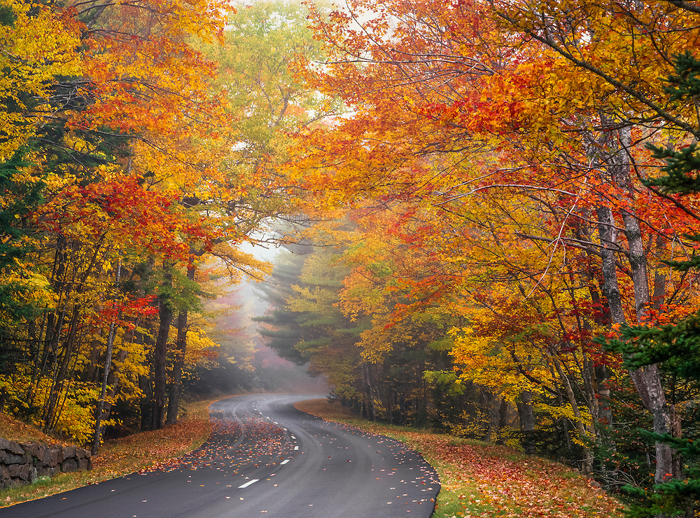 Park road S-curves through maple woods in fall, Acadia National Park, ME