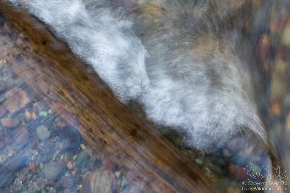 Pipers Creek flows over a log, forming a small cascade in this top-down view Carkeek Park, Seattle, Washington.