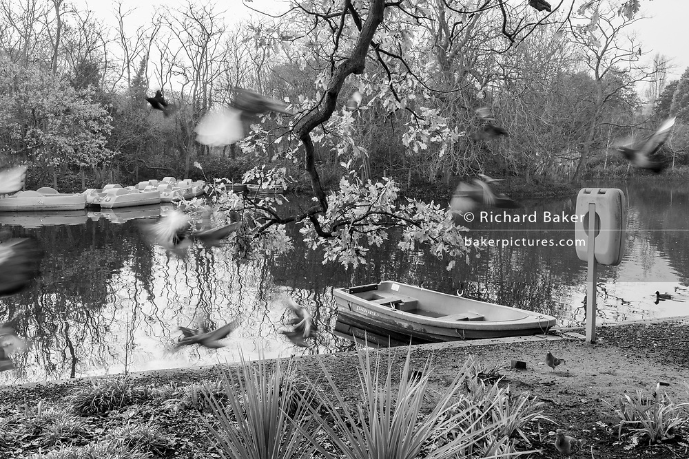 Birds in-flight blur across a landscape of the boating lake in Dulwich park, on 8th December 2020, in London, England.