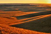 Rolling hills of grasslands at sunset<br /> Maple Creek<br /> Saskatchewan<br /> Canada
