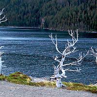 Sun Point  Old Tree 2