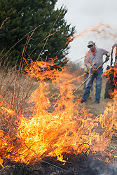 Volunteer spreading fire with drip torch during controlled burn on Wilt's Prairie, a Blackland Prairie remnant near Ennis, Texas, south of Dallas. Texas, USA.