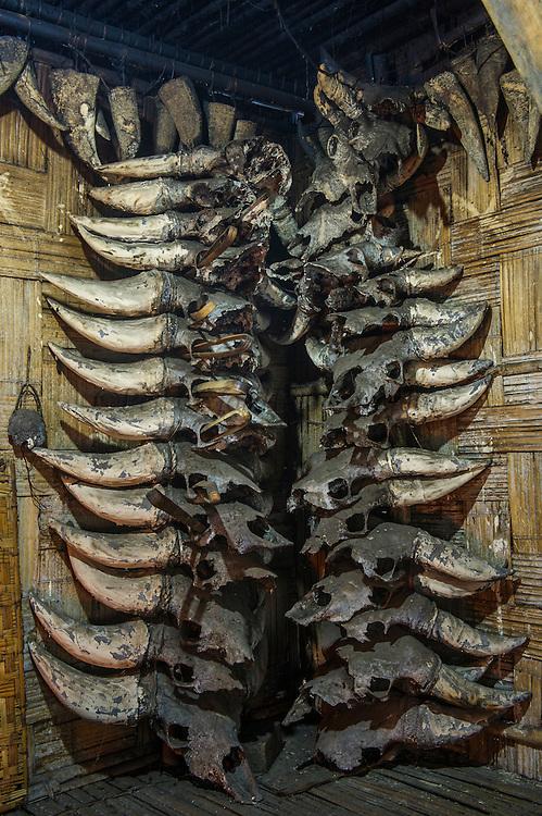 Mithun or domesticated Guar Bos skulls in house<br /> Apatani Tribe<br /> Arunachal Pradesh<br /> North East India