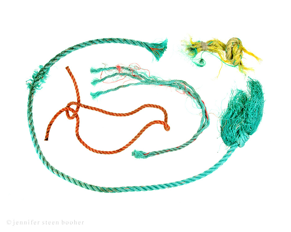 Pieces of nylon rope used to secure lobster traps, found on the beaches of Mount Desert Island, Maine.
