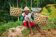 Rice farmer, Tegallalang Rice Terrace, Bali, Indonesia