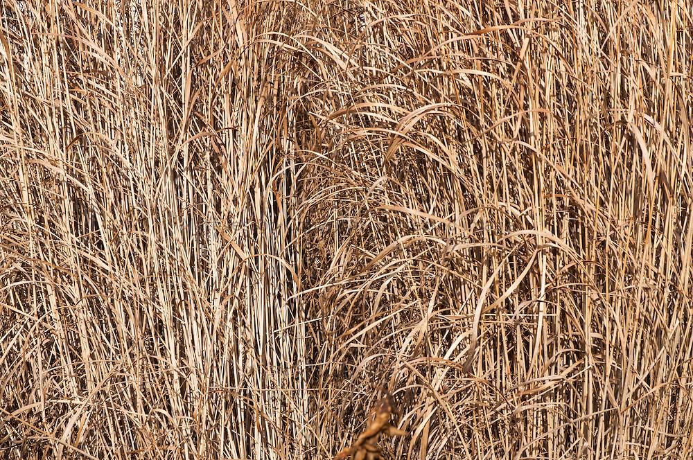 Bleached grass
