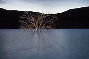 A tree rises from the bottom of Indian Valley Reservoir in rural Lake County, CA. Indian Valley is one of many reservoirs too low and stagnant to support recreation, one of many benefits listed as justification for their construction.  November 8, 2009.