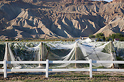 Palisade, near Grand Junction, Colorado