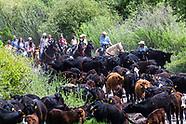 Lundquist Cattle Drive 2020