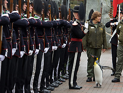 """Sir Nils (with his keeper Lynda Burrill) reviews His Majesty the King of Norway's Guard as they paid a very special visit to RZSS Edinburgh Zoo to bestow a unique honour upon king penguin Sir Nils Olav. Already a knight, the most famous king penguin in the world was given the new title of """"Brigadier Sir Nils Olav"""".(c) Brian Anderson 