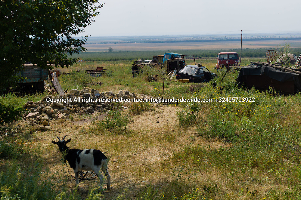 20150828  Moldova, Transnistria,Pridnestrovian Moldavian Republic (PMR) Frunze.Rural Transnistrian village Frunze, east of Tiraspol is all agriculture, and people don't really give about the environment. Car wrecks lie in the field while a goat is grazing in the foreground, in the shadow of a tree